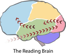 Map of the Reading Brain