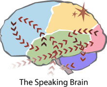 Map of the Speaking Brain