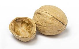 Photo of an open walnut shell